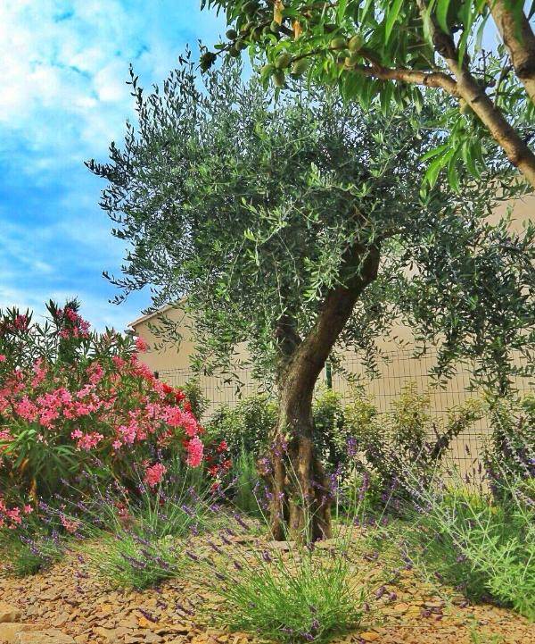 Centenarian Olive Tree - Large Studio (40m2) opening on a Provençal Garden - Saint-Remy-de-Provence - rentals