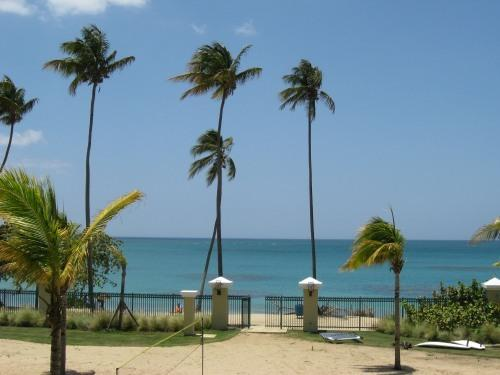 View from Balcony - Beachfront, Rainforest,Luquillo just minutes away. - Loiza - rentals