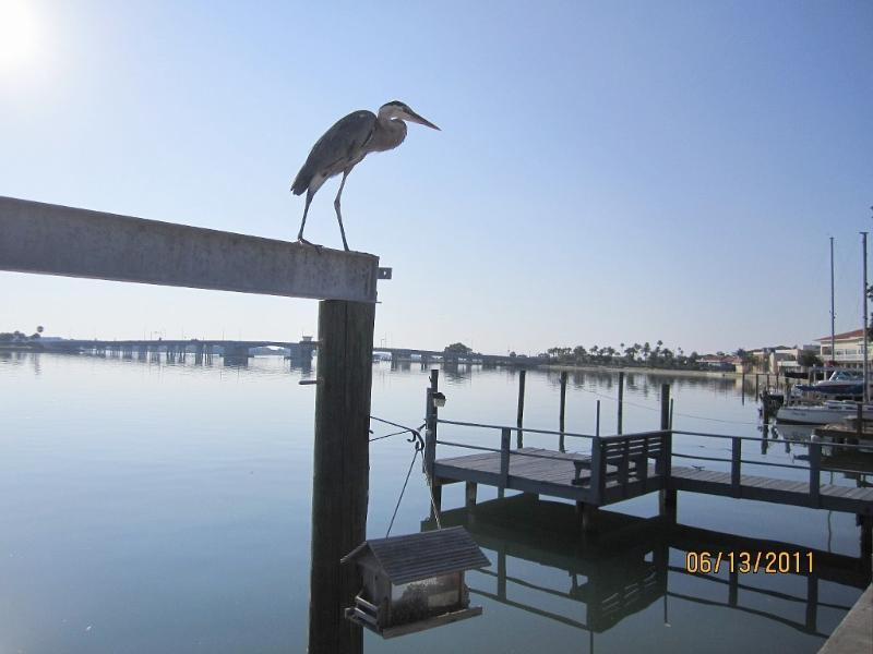 Herons, Dolphins, Manatees and Egrets play at waterside as the boats float by. - Fabulous Home, Dock and Hot Tub on Wide Water! - Saint Pete Beach - rentals