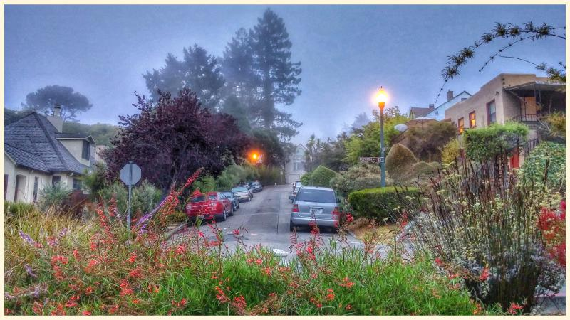 Greeting the day - Serene, Eco-Friendly Rooms/House in North Berkeley - Berkeley - rentals