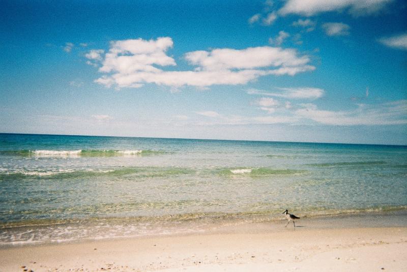 Cape San Blas a natural beach with clear blue green water~~~~~~Patsysbeachplace - Cape San Blas Florida  Pets Ok~U2 - Port Saint Joe - rentals