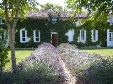 heady smell of lavender - Spacious stone farmhouse, fantastic terrace. - Coutras - rentals