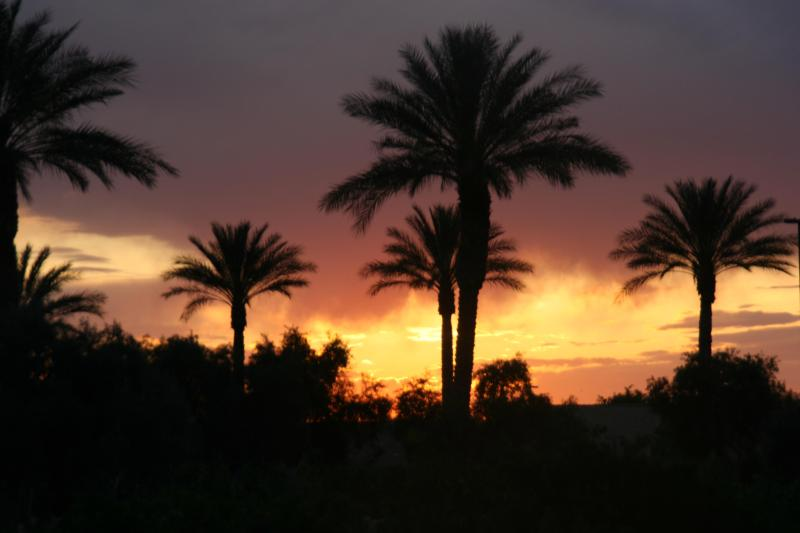 Arizona Palm Tree Sunset! - WOW... 3 HEATED Pools/Spas GOLF, Tennis, MTNS+SUN! - Queen Creek - rentals