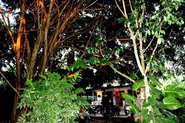 Casa Paradiso - Image 1 - Puerto Ayora - rentals
