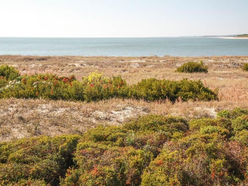 Pelican Watch 1380 - Image 1 - Seabrook Island - rentals