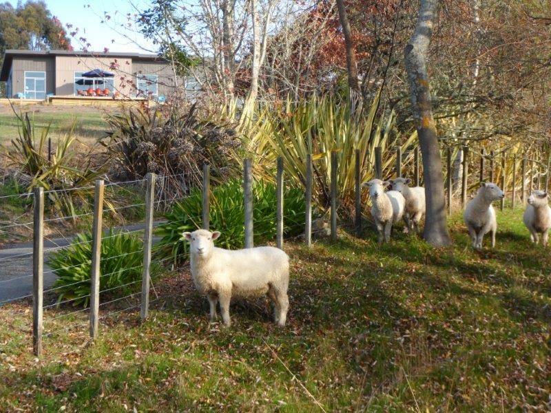 Hand-feedable sheep, driveway, and Copper Gate in background. 7 acres beside Mapua seaside village. - Corru Gate, Copper Gate, Kissing Gate - superb! - Mapua - rentals