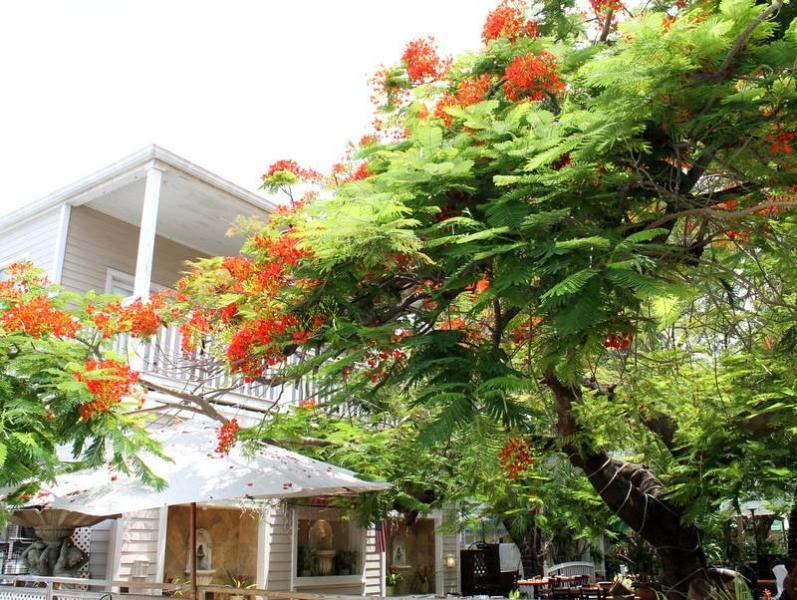 Duval on the Square - Image 1 - Key West - rentals
