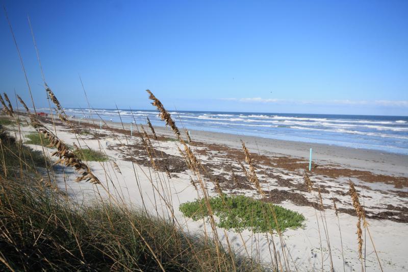 Unbelievable Ocean Views - Las Brisas 431 - New Smyrna Beach - rentals