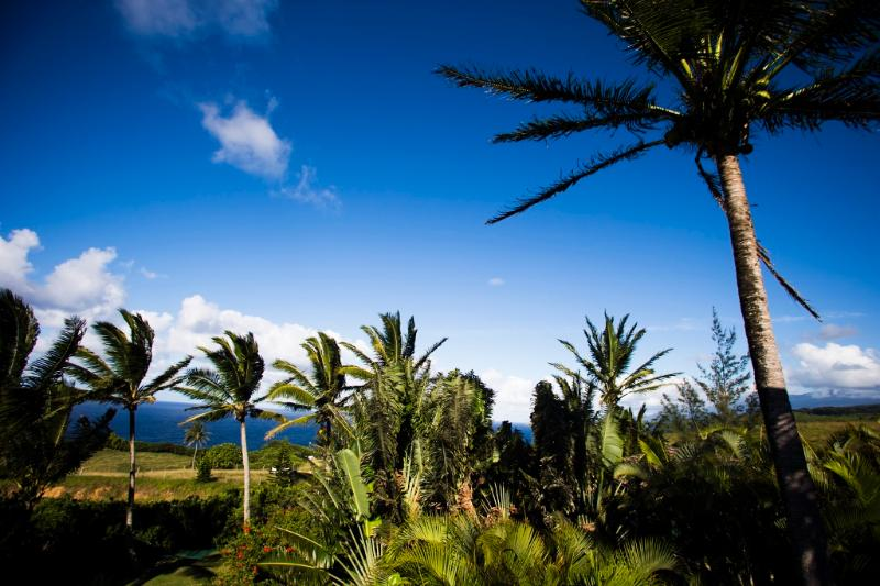 Spectacular Ocean and Mountain Views - Spectacular Ocean/Mountain Views, Honeymoon, Maui - Haiku - rentals