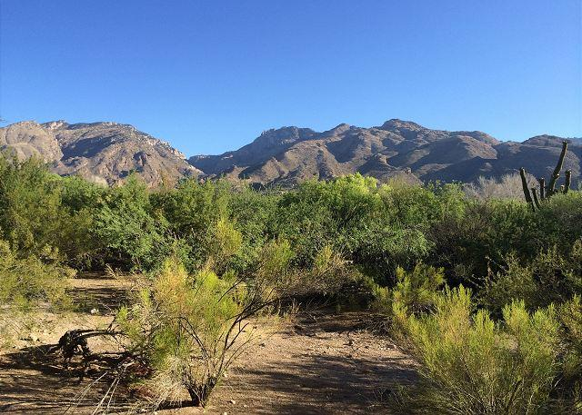 Picture Name - Relax and enjoy spectacular views of the Catalina Mountains! - Tucson - rentals