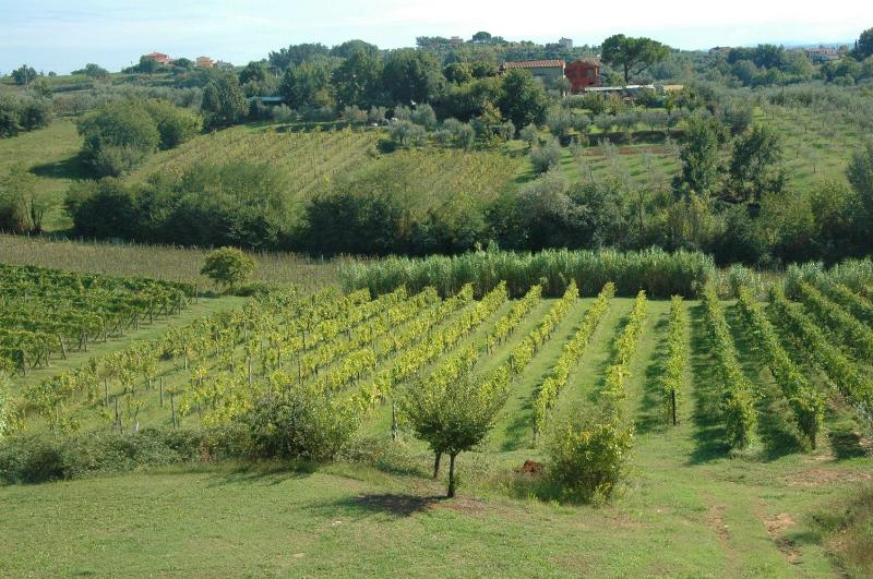 View - Holiday home I Melograni 4 - Lucca - rentals