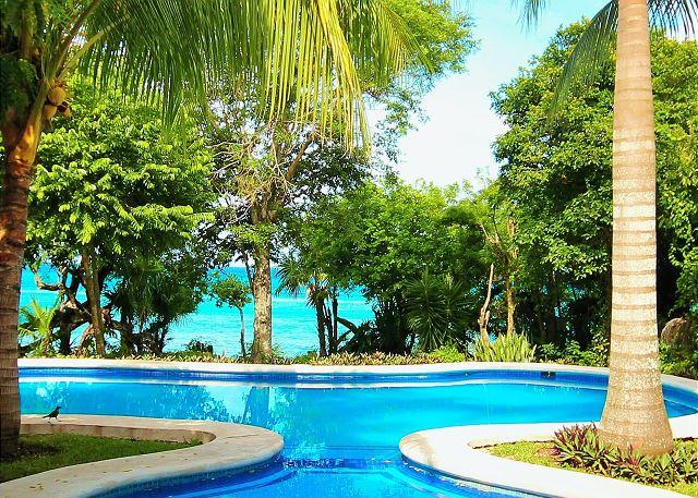 Private pool in paradise! - Oceanfront Villa With Private Pool.  Close to Reefs,  Optional Cook Service - Cozumel - rentals