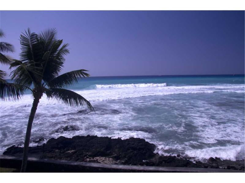Banyan Tree #305 - Image 1 - Kailua-Kona - rentals