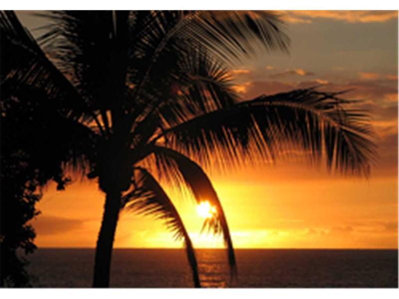 Sea Village#3318 - Image 1 - Kailua-Kona - rentals