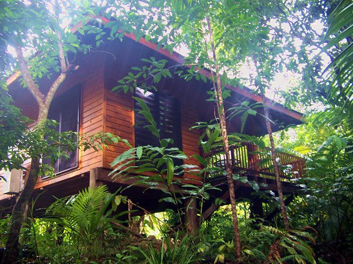Handmade wooden cabins overlooking the rainforest - Wildwood set on organic orchard in Cape Tribulatio - Cape Tribulation - rentals