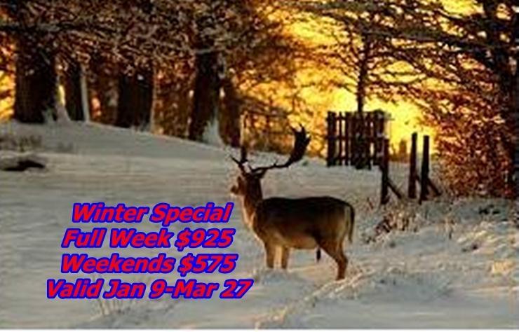 Winter 2015 Special - My Tranquil Getaway - Lake Wallenpaupack, Pa - Paupack - rentals
