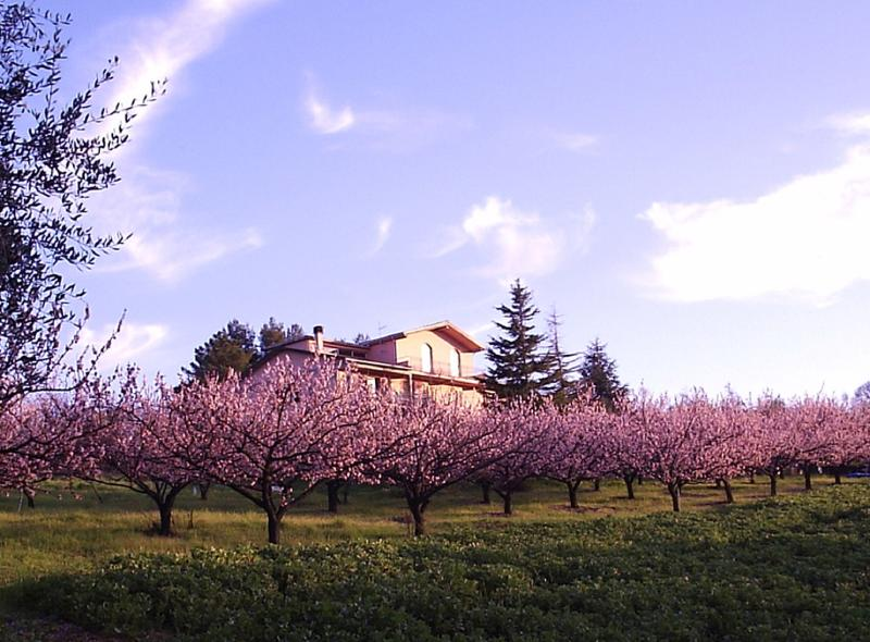 Around the property you can find apricots and olivoil trees - Apartments in Villa Near Pisa. Breathtaking views. - Pisa - rentals
