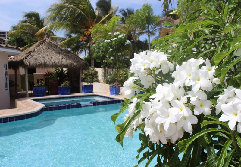 Private pool with tropical landscaping - Palm Beach Paradise Villa - Noord - rentals