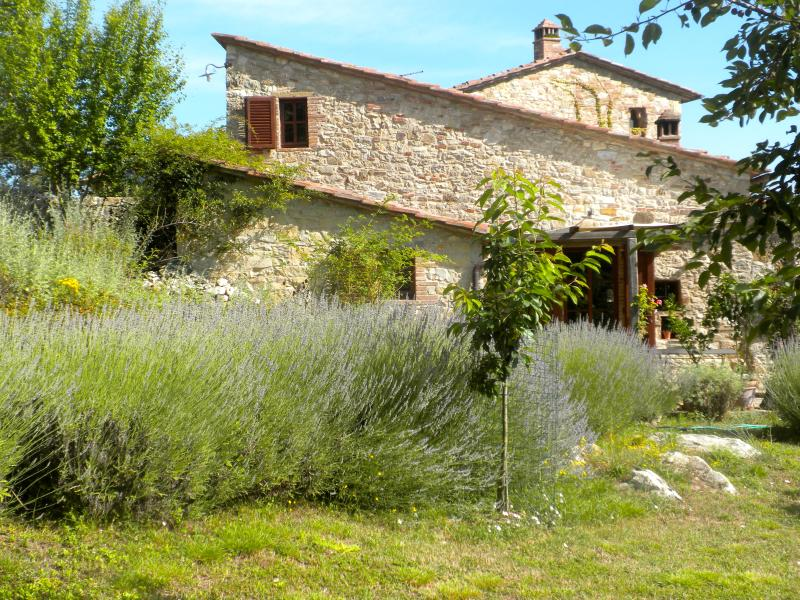 Fienile cottage in summer with lavenders in bloom - 1 Bedroom Cottage in the Chianti Hills of Tuscany - Castellina In Chianti - rentals