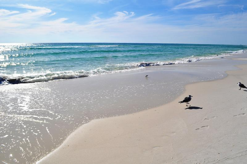 """""""Pelican Pointe Unit 1204"""" Relax and Renew in this Gulf Front Retreat!!! - Image 1 - Orange Beach - rentals"""