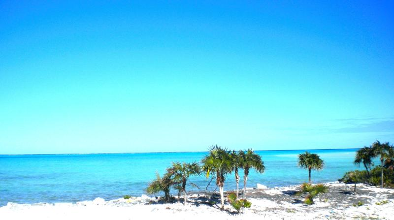 View at the Back of the House - Secluded Luxury Accommodation- Whitby North Caicos - Whitby - rentals