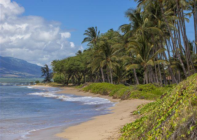 Waiohuli Beach Hale is situated on Waiohuli Beach. - Waiohuli Beach Hale #D-220 Oceanfront Ocean View 1 Bd 1 Ba  Great Rates!! - Kihei - rentals