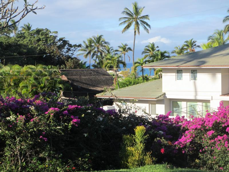 Lovely bougainvillia-line lawn with ocean views through swaying palms - Close, close, close to ocean-Wailea Ekahi 20B - Wailea - rentals