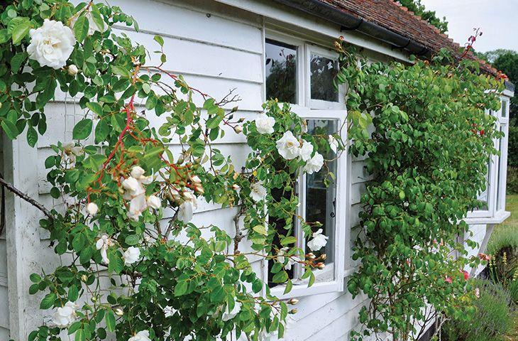 Tufton Croft - Image 1 - Wittersham - rentals