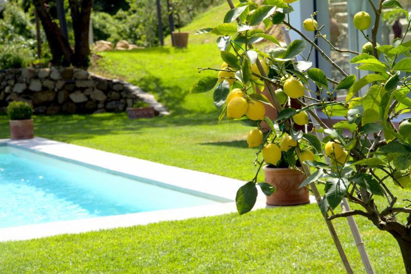 Villa Limona - Image 1 - Rignano sull'Arno - rentals
