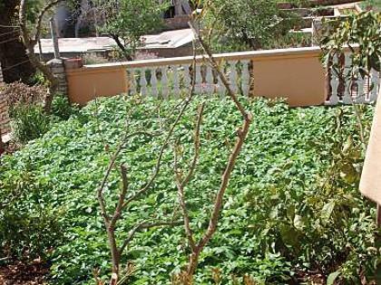 garden (house and surroundings) - 5519 A1(2+1) - Sali - Sali - rentals