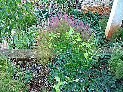 garden (house and surroundings) - 01414KORC A4(2+2) - Korcula - Korcula - rentals