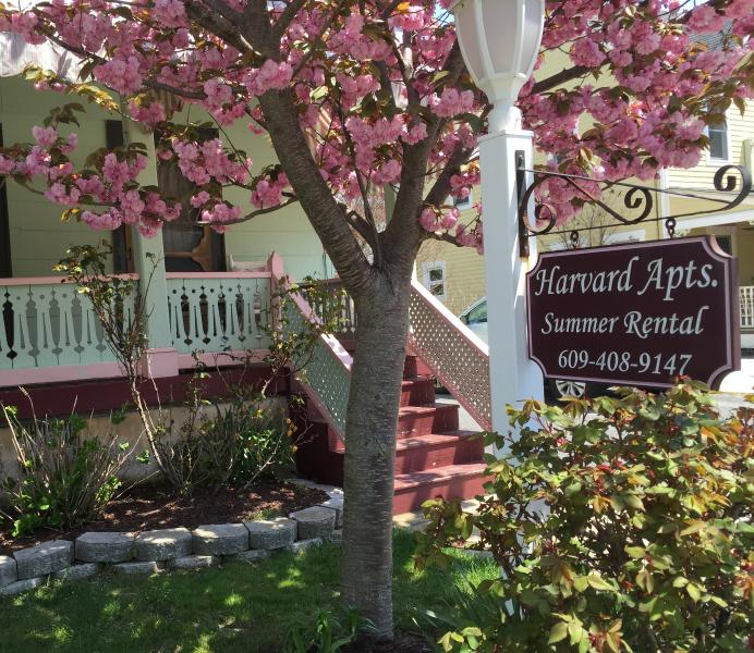 Harvard Apartments Cherry Blossom Tree in bloom - Harvard Apt #2 -Great Loc! 2 blocks to beach, mall - Cape May - rentals