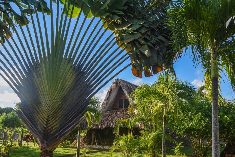 Chalet Tropical #3 : view from the garden - ChaletTropical #3, Best Tree House in Las Galeras! - Las Galeras - rentals