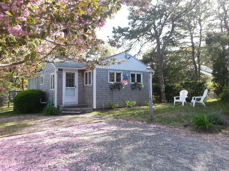 Classic Cape Cod Cottage - Classic, Quiet,  Private Dennisport Cottage - Dennis Port - rentals