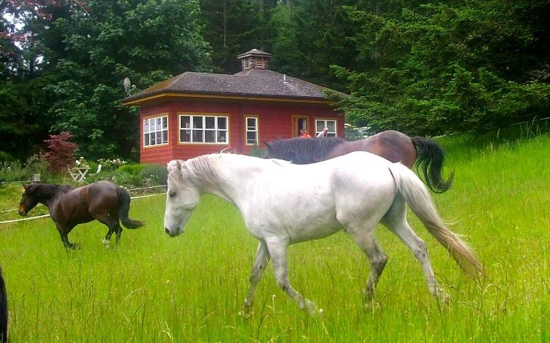 Mustangs in the meadow outside your door! - The Rose Cottage on Orcas Horse Farm - Deer Harbor - rentals