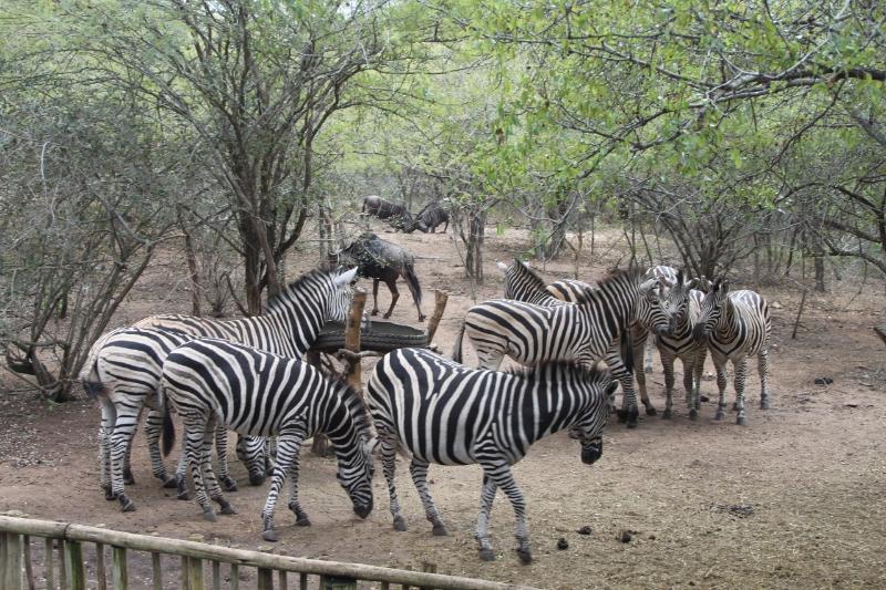 View of animals from the deck of Zinkwazibush - Zinkwazibush lodge (4 Star) - Self catering - Marloth Park - rentals