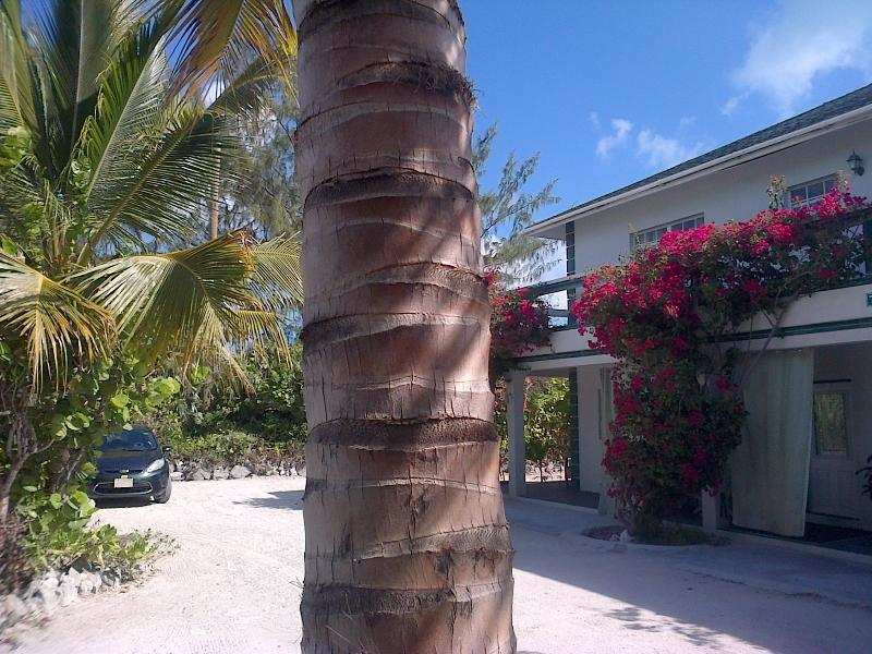 Silver Palm Beach House 1A - Silver Palm Guest House 1A - Providenciales - rentals