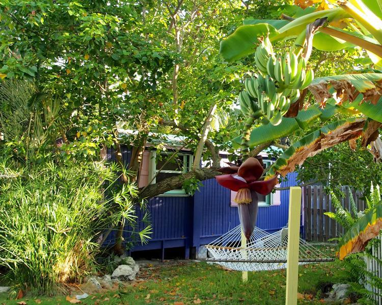 Private Garden Cottage ~ Baby Conch - Image 1 - Marathon - rentals