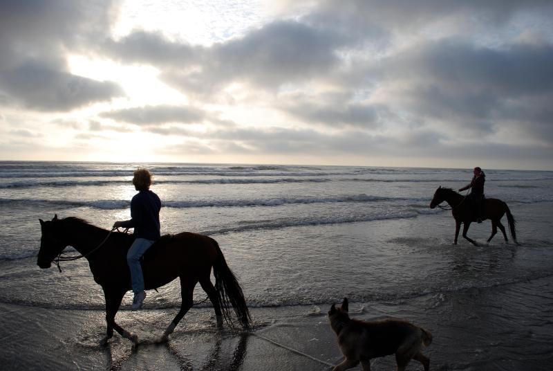 Ride your horses on the beach - Lake views, Easy beach access, Horses+ welcome - Long Beach - rentals