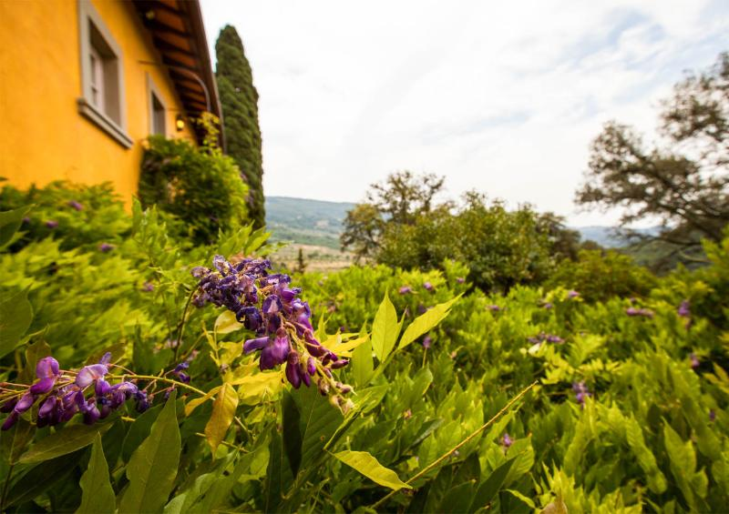 Charming Country Bed and Breakfast Close to Floren - Image 1 - Fiesole - rentals
