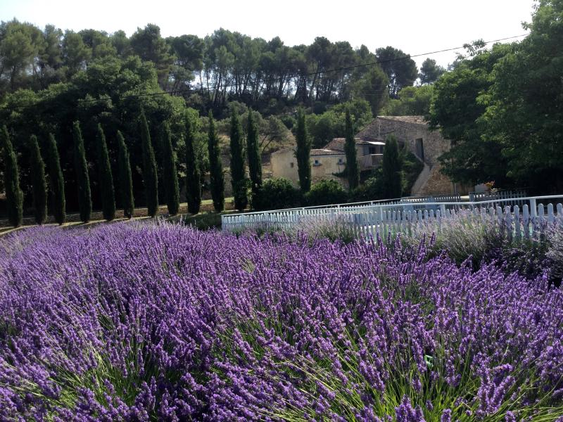 View towards La Grange from lavender - Charming country property with pool and tennis - Aix-en-Provence - rentals
