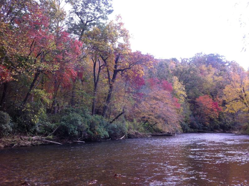 Fall colors from yard are always great!   - RiverDance Lodge 2 Riverfront, Waterfalls REDUCED! - Franklin - rentals