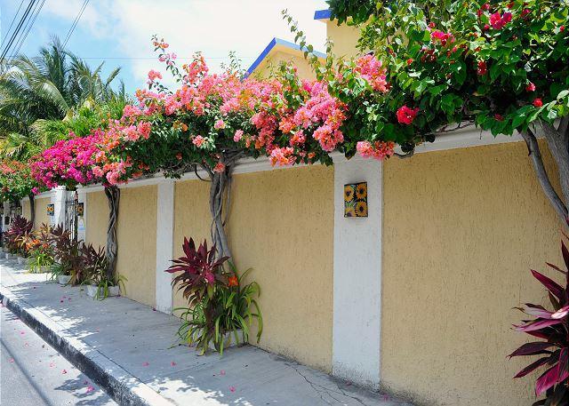 STREET VIEW - POPULAR 2nd FLOOR APT, OCEAN BREEZE, KING BED, POOL, AIR CON, FREE BIKES. - Puerto Morelos - rentals