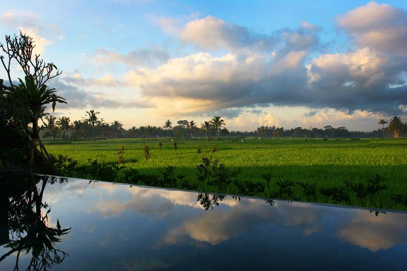 View of Rice Fields over Infinity Pool - Modern spacious villa; pool + amazing 360° views - Tegalalang - rentals