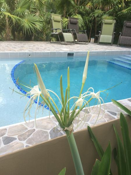 Large tiled deck with pool on private fenced property - J & S Limited Guest House - Caye Caulker - rentals