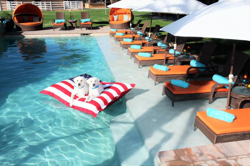 Contemporay Pool w/ Tanning Ledge,& Chaises for 14, comes complete with optional 4 legged companions - Indulge in Your Own Private Resort, Groups Welcome - Indio - rentals
