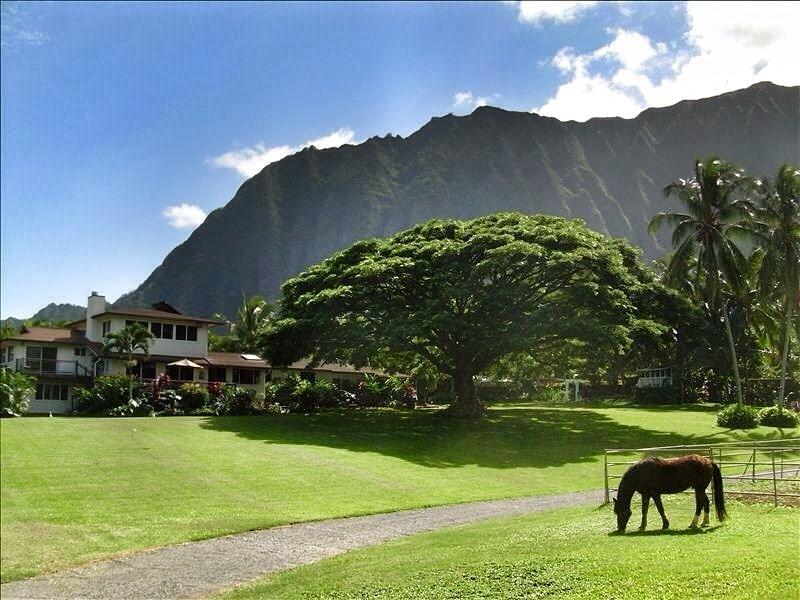Open Palms Plantation - Open Palm Plantation A Slice of Heaven in Paradise - Waimanalo - rentals