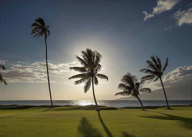 Maui Sunset #A509  Oceanfront Panoramic Ocean Views 1 Bd 2 Bath Great Rates! - Image 1 - Kihei - rentals