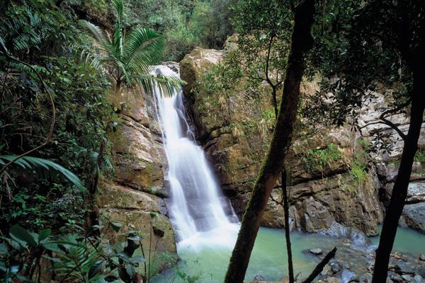 Just one of over 20 magnificent waterfalls in Puerto Rico - Elementāl Eco~Retreat & Adventure Tours - Rio Grande - rentals