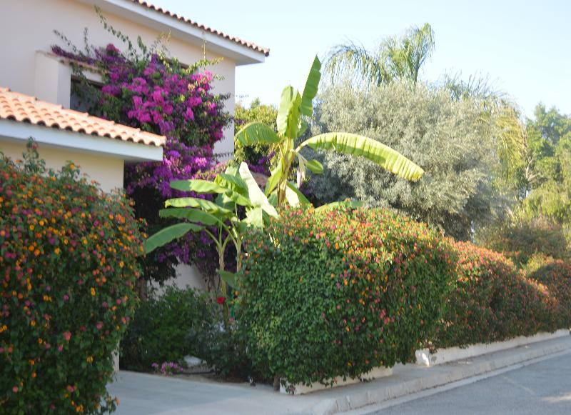 Three bedroom villa,private pool,patio,BBQ,parking,free wifi in a peaceful location,2.5 km from sea - Reginas three bdr priv. pool,garden,wi-fi,2km sea. - Oroklini - rentals